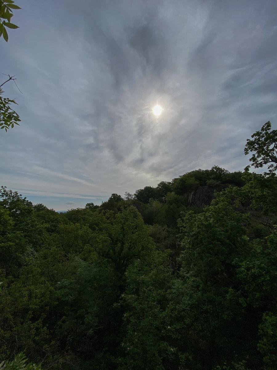 Into the Woods | Lisa Fiege | Blog & Creative Studio